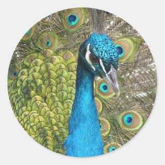 beautiful peacock image classic round sticker