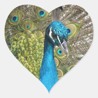 beautiful peacock image heart sticker