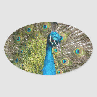 beautiful peacock image oval sticker