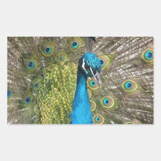 beautiful peacock image rectangular sticker