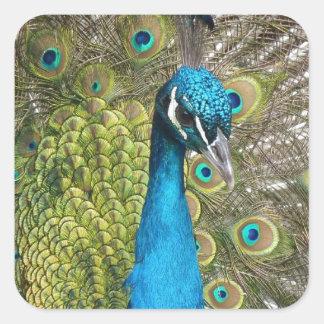 beautiful peacock image square sticker