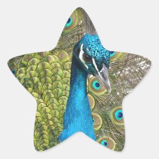 beautiful peacock image star sticker