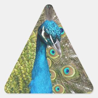 beautiful peacock image triangle sticker