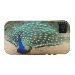 Beautiful Peacock iPhone 4 Case