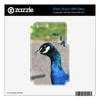 Beautiful Peacock IPod Touch Skin
