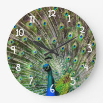 Beautiful Peacock Large Clock