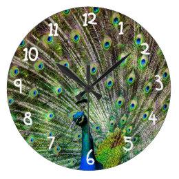 Beautiful Peacock Large Clock