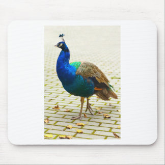Beautiful peacock mouse pad