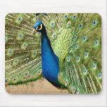 Beautiful Peacock Mousepads
