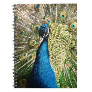 Beautiful peacock notebook