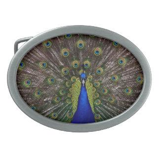 Beautiful Peacock Oval Belt Buckle