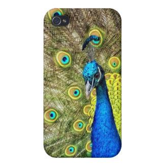 Beautiful Peacock Photo iPhone 4/4S Case