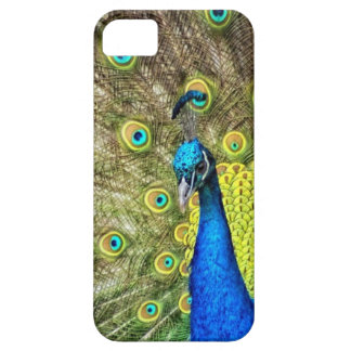 Beautiful Peacock Photo iPhone SE/5/5s Case