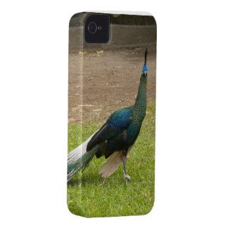Beautiful Peacock Photo On Case