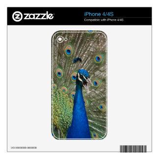 Beautiful Peacock iPhone 4 Skins