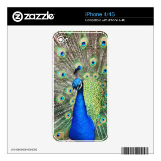 Beautiful Peacock Decals For The iPhone 4