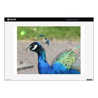 Beautiful Peacock Skin For Laptop