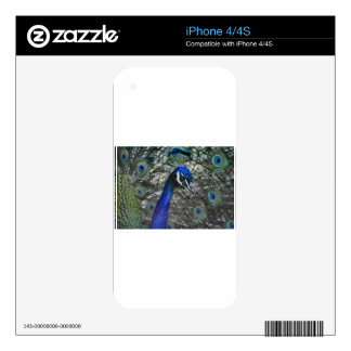 Beautiful peacock skins for iPhone 4S