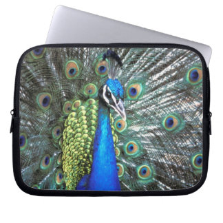 Beautiful peacock spreading colorful feathers laptop sleeve
