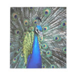 Beautiful peacock spreading colorful feathers memo pads