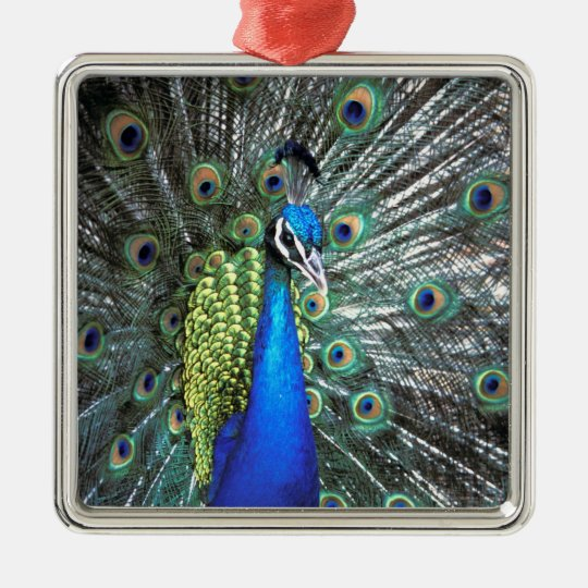 Beautiful peacock spreading colorful feathers metal ornament