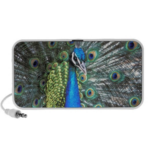 Beautiful peacock spreading colorful feathers mini speaker