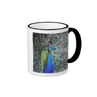 Beautiful peacock spreading colorful feathers ringer coffee mug
