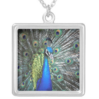 Beautiful peacock spreading colorful feathers silver plated necklace