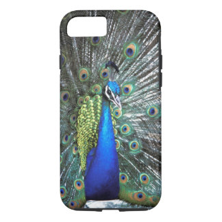 Beautiful peacock spreading colourful feathers iPhone 7 case