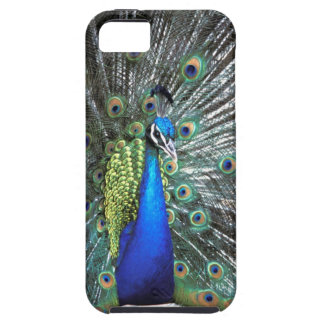 Beautiful peacock spreading colourful feathers iPhone SE/5/5s case