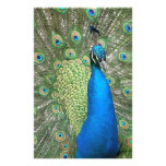 Beautiful Peacock Stationery Paper