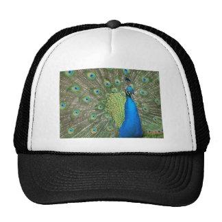 Beautiful Peacock Trucker Hat