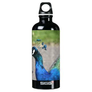 Beautiful Peacock Water Bottle