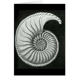 Beautiful pencil drawing of Amaltheus ammonite Card