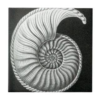 Beautiful pencil drawing of Amaltheus ammonite Ceramic Tile