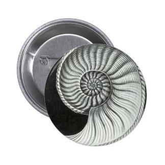 Beautiful pencil drawing of Amaltheus ammonite Pinback Button