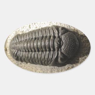 Beautiful Phacops trilobite fossil photo Oval Sticker