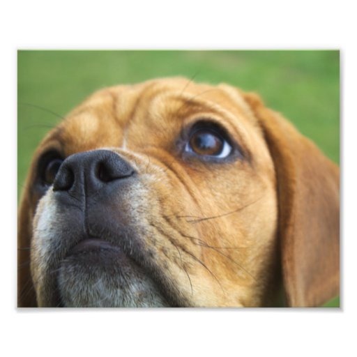 Beautiful photography puppy dog house pets photograph