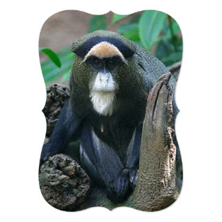 Beautiful Picture of a Guenon Sitting on Stump Card