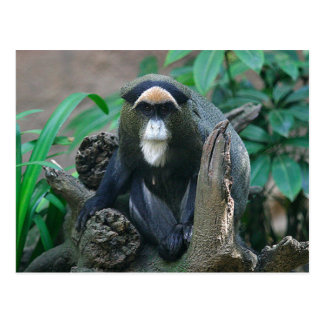 Beautiful Picture of a Guenon Sitting on Stump Postcard