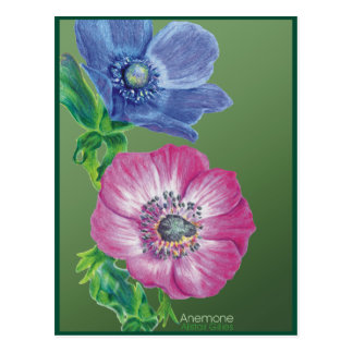 Beautiful picture of an Anemone Postcard