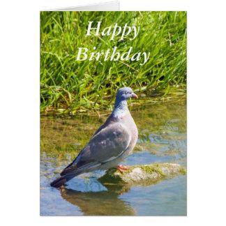 Beautiful pigeon bir happy birthday greetings card