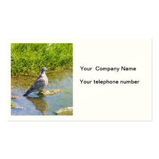 Beautiful pigeon bird photo business card