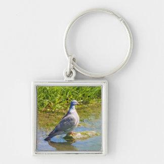 Beautiful pigeon bird photo keyring,  keychain