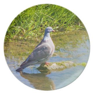Beautiful pigeon bird photo portrait dish, plate