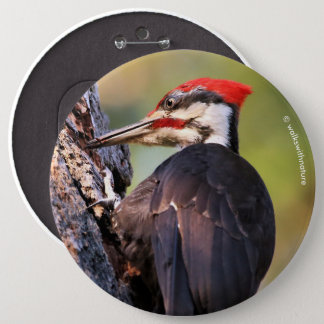 Beautiful Pileated Woodpecker on the Tree Pinback Button