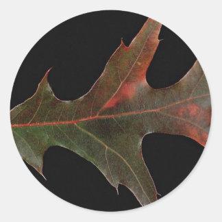 Beautiful Pin oak leaf Stickers