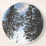 Beautiful Pine Trees. Beverage Coasters