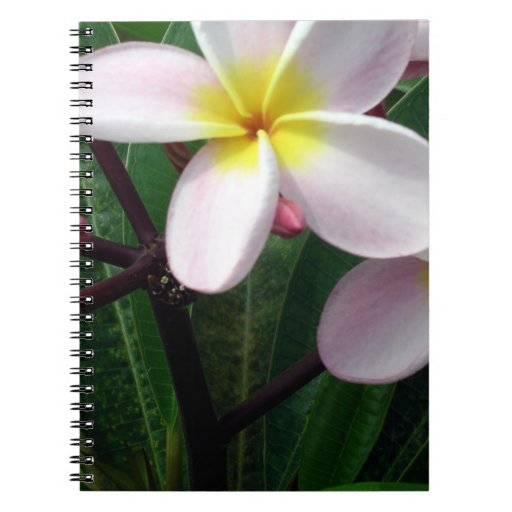 Beautiful Pink and Yellow Plumeria Spiral Notebook