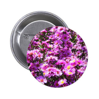 Beautiful Pink Aster Flowers Button
